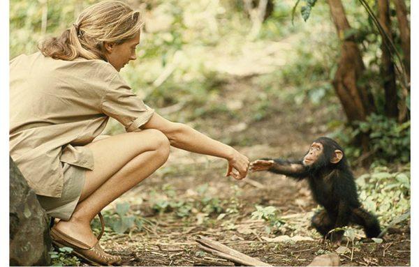 Jane Goodall with shimpanse